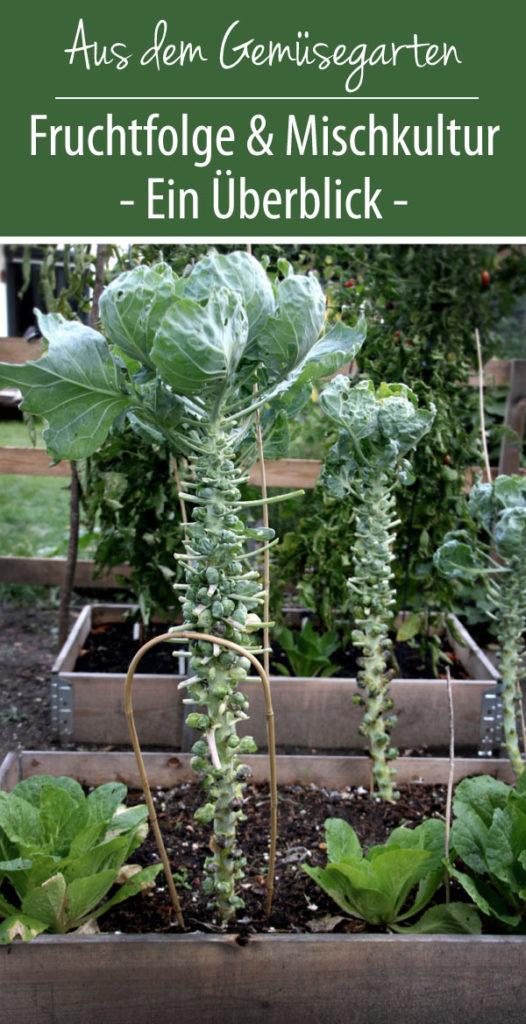 Fruchtfolge & Mischkultur im Gemüsegarten - Ein Überblick