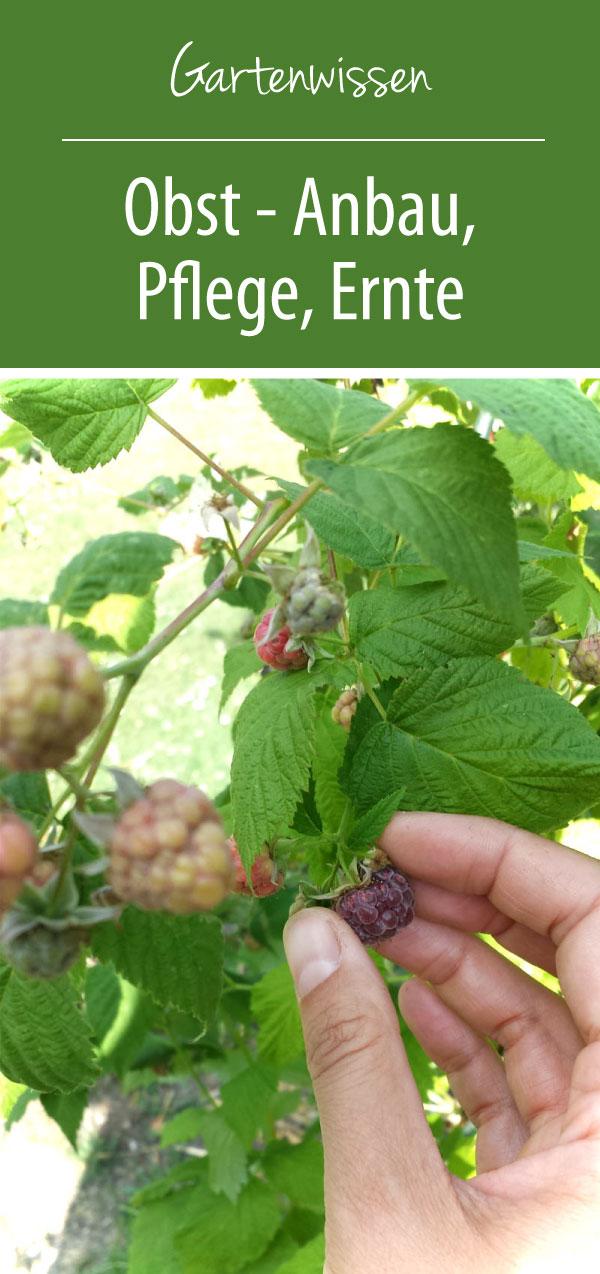 Obst Anbau Pflege Ernte