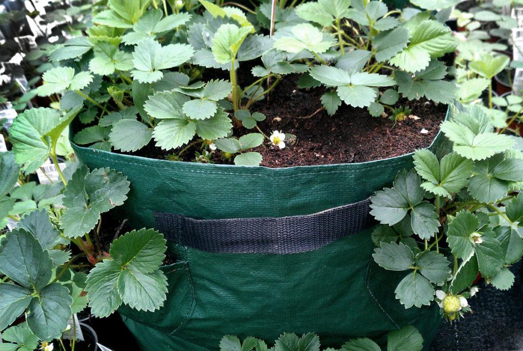 Pflanztasche mit Erdbeeren für Balkon und Terrasse