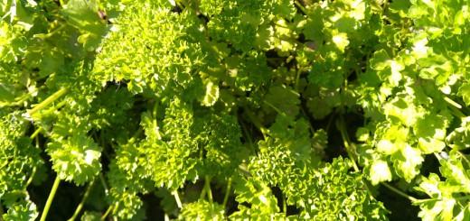 Gemüse Winter