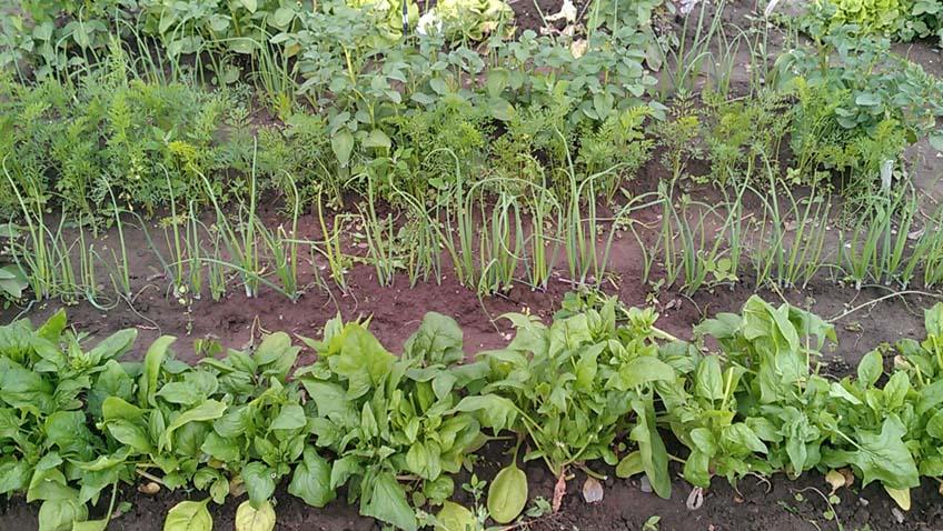 Anbauplanung im Gemüsegarten