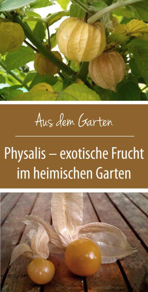 Physalis - Exotische Frucht aus dem heimischen Garten