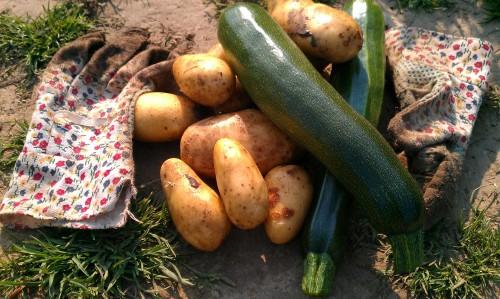 Zucchini und Kartoffeln