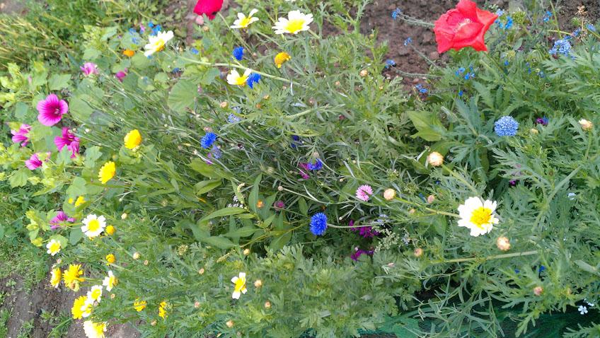 Gartengestaltung Naturgarten
