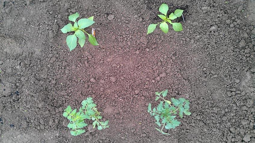 Freilandsaison im Gemüsegarten