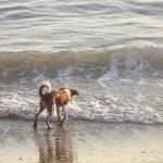 Haustier-Hitze-Tipps