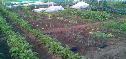 Gemüse aus dem Stadtgarten