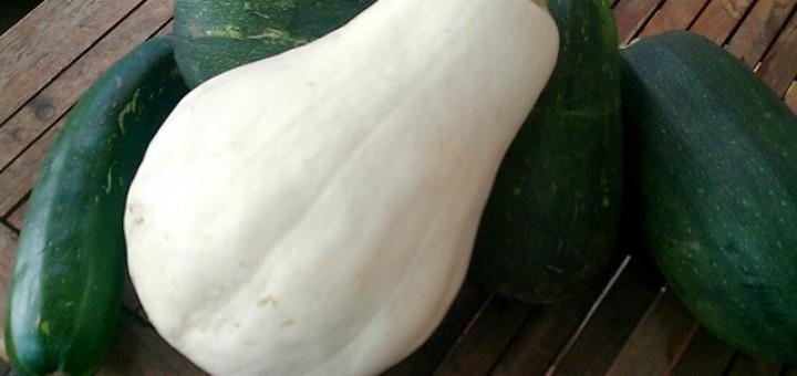 Zucchini Bianco di Trieste