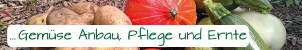 Wissenswertes über Gemüse Anbau