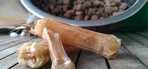 Hundefutter BARF oder Trockenfutter