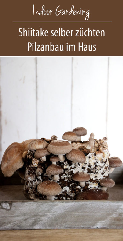 Shiitake selber züchten - Fertigkultur Pilze im Haus