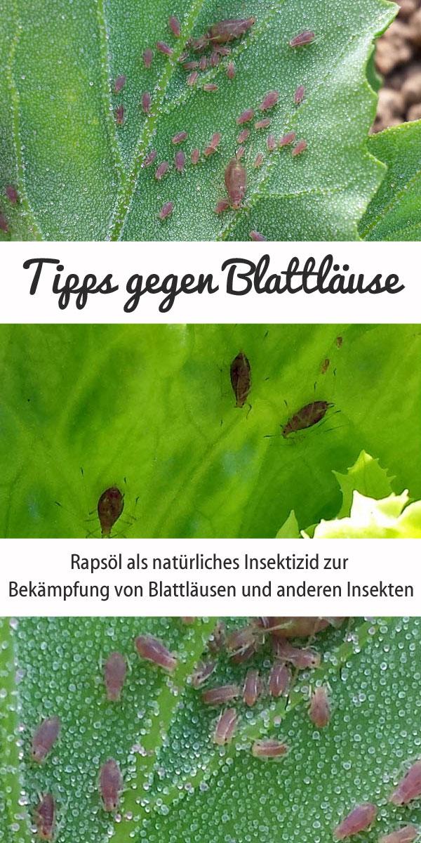 Tipps gegen Blattläuse - Rapsöl gegen Blattläuse