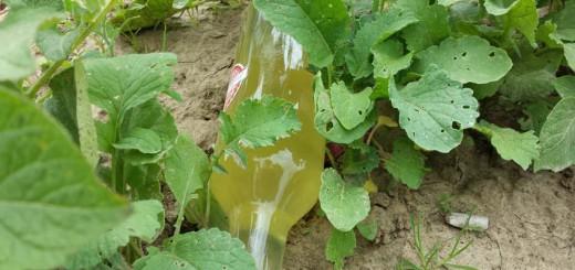 Flaschenpost im Gemüsegarten