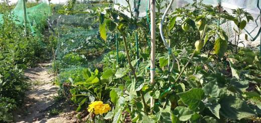 Garten im Überblick