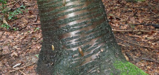 Schnecken auf Bäumen
