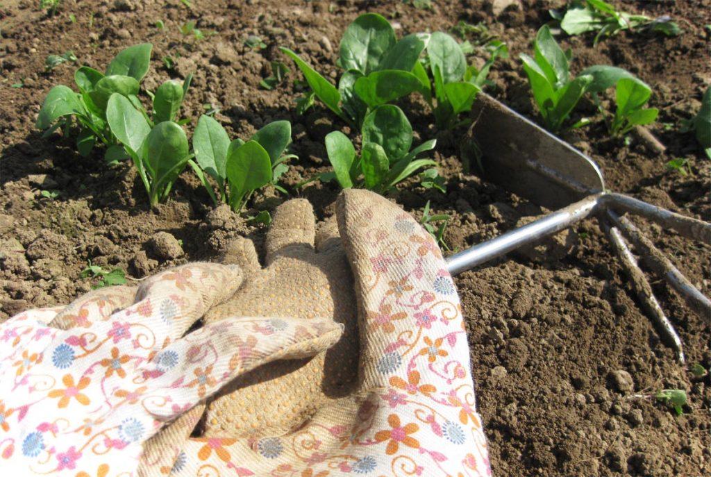 Was kann man im Juli pflanzen