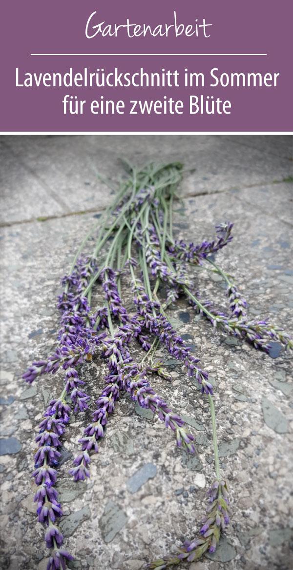 Lavendel Sommerschnitt - Im Sommer schneiden für eine zweite Blüte