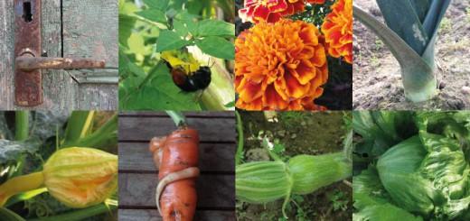 Gemüsegarten im Oktober