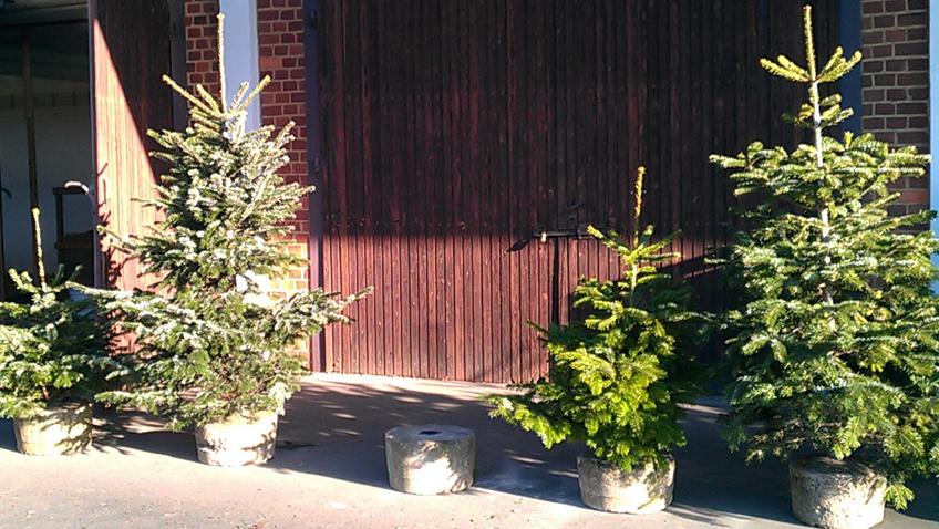 Weihnachtsbaumarten