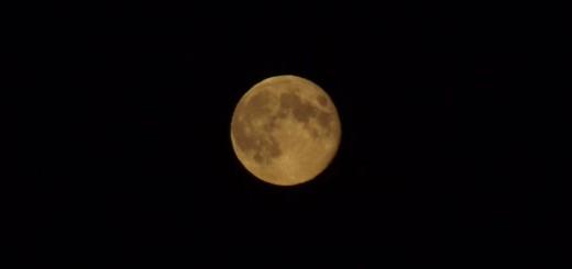 Gartenarbeit mit dem Mond - Vollmond