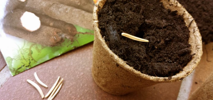 Samen schnell keimen lassen
