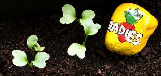 Gemüse für Anfänger