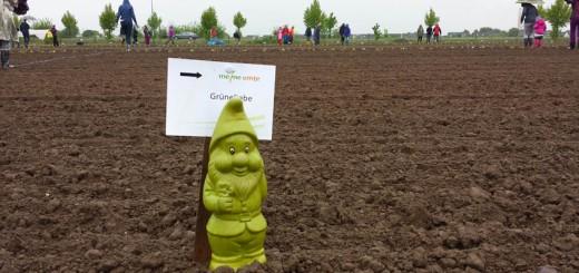 Gartenzwerg auf dem Feld