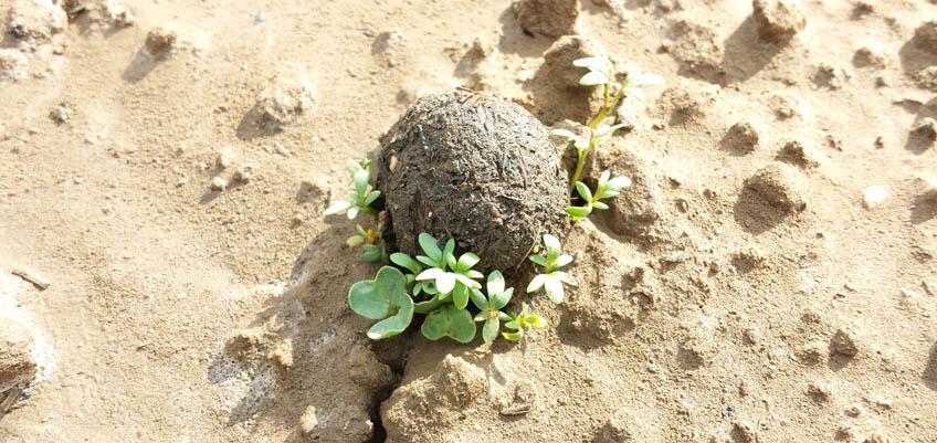 Seedball keimt