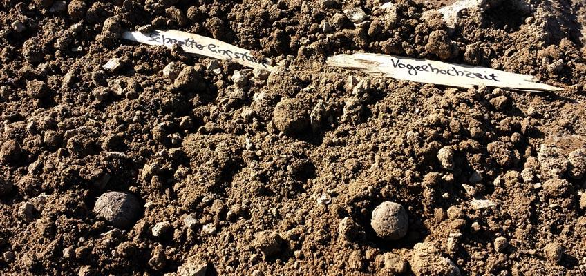Seedballs pflanzen - Blumen