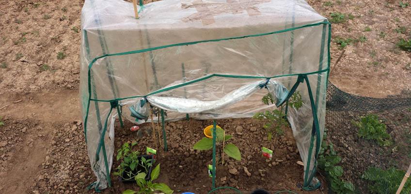 Tomatengewächshaus wieder aufgebaut