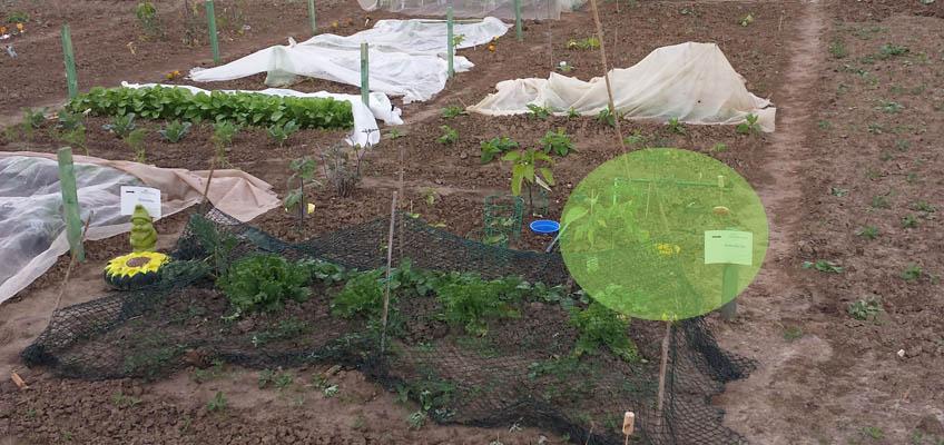 Tomatenhaus vom Wind verweht
