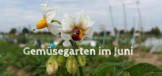 Gemüsegarten im Juni