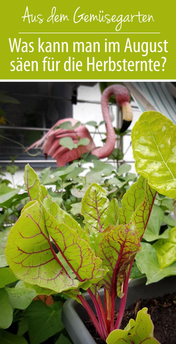 Was kann man im August säen und pflanzen?