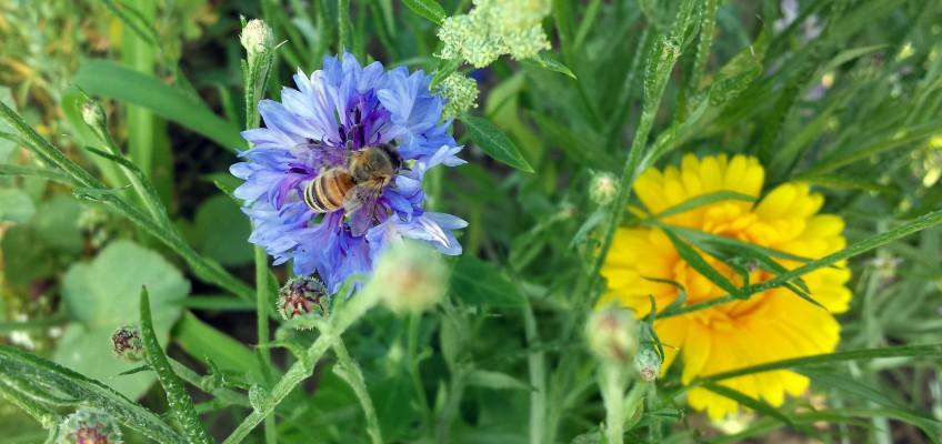 Biene auf Blüte - Seedball Vogelhochzeit
