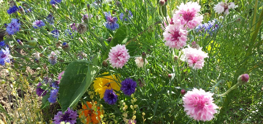 Bunte Blüten auf dem Feld