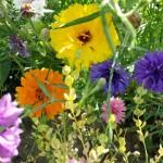 Essbare Blüten - Blütenmeer