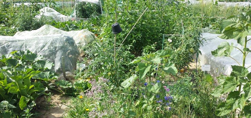 Gartenparzelle