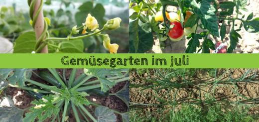 Gemüsegarten im Juli
