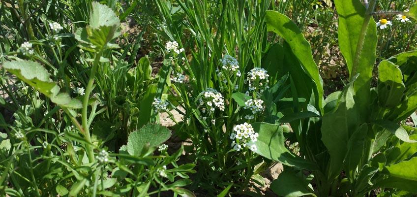 Seedballs mit Blüten