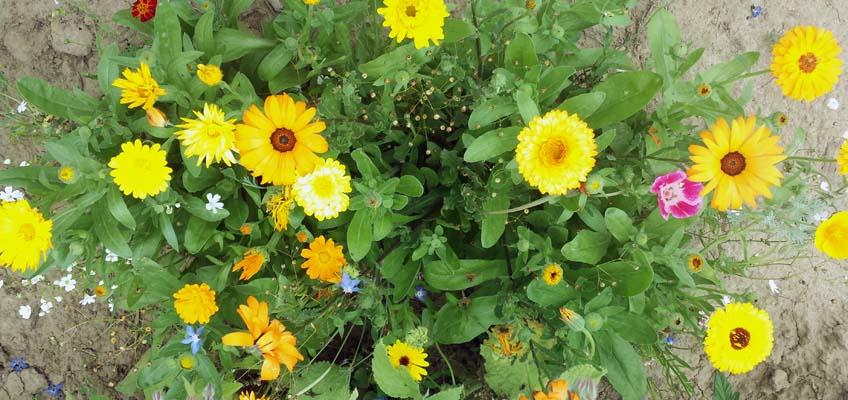 Blütenmeer Seedballs