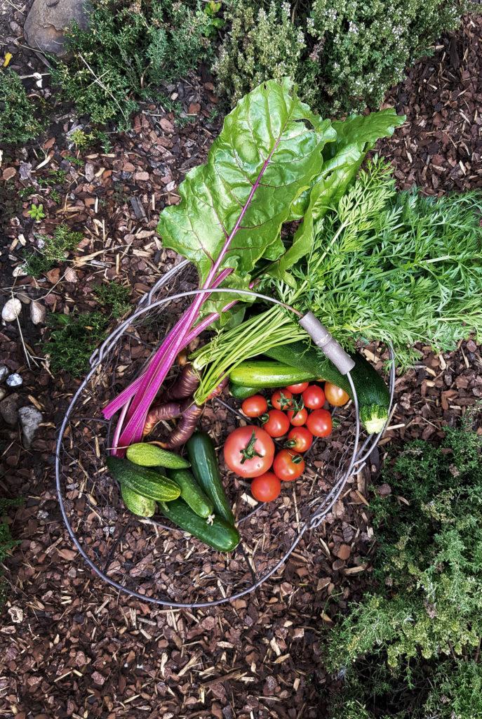 Ernten im August - Gartenarbeit im August