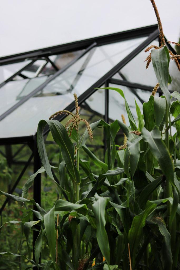 Gartenarbeit im August Was ist zu tun im Gemüsegarten?