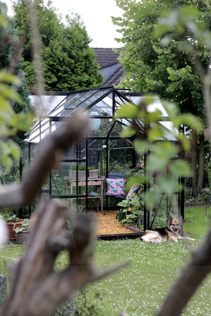 Gemüsegarten Gartenarbeit im August