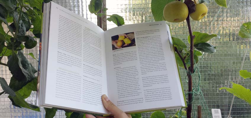 Obstsorten für den Permakulturgarten - Nashi