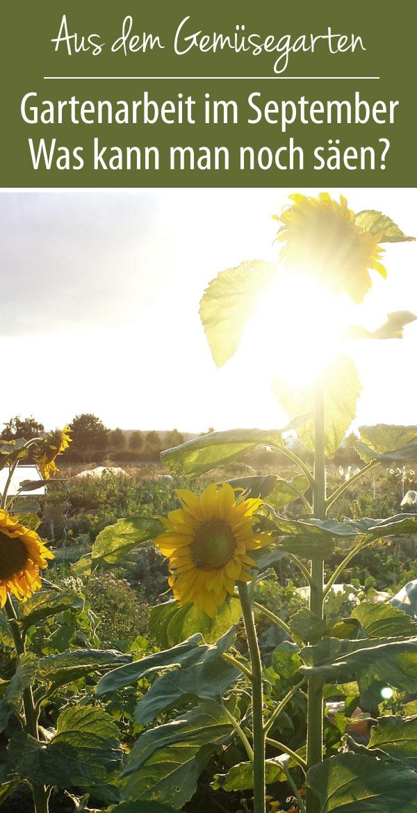Gartenarbeit im September - Was kann man im September säen?