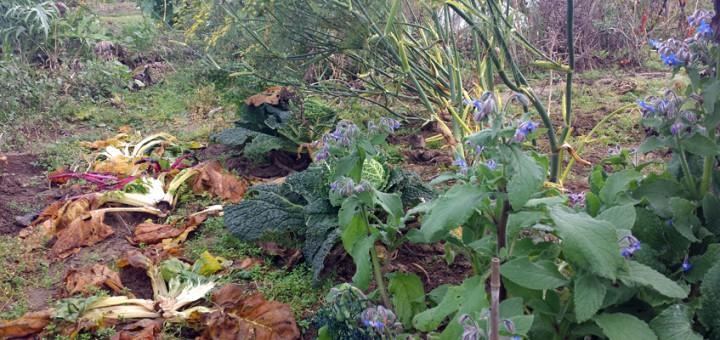 Gemüsegarten im November