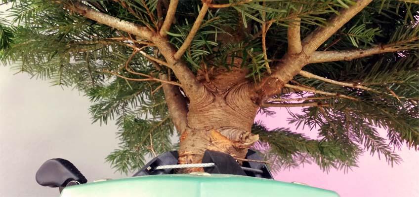 Weihnachtsbaum im Ständer