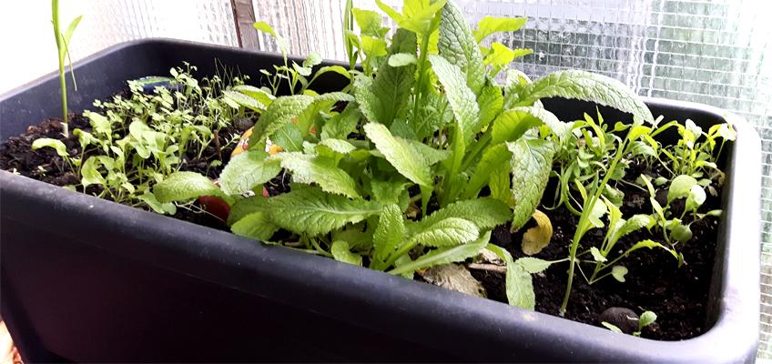 Kräutergarten im Hochbeet auf dem Balkon