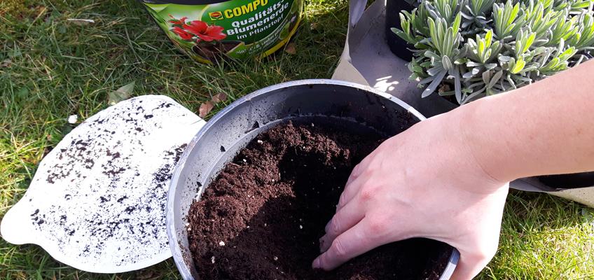 Compo Sana Pflanzen einfach pflanzen