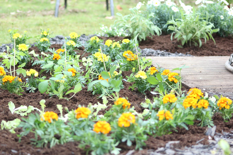 Gartengestaltung Gemüsegarten Pflanzen Kölle